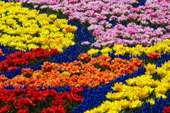 Frühlingsblumenbett Stockfotos