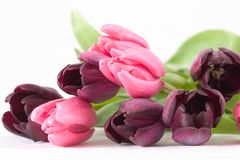 Frühlingsblumenblumenstrauß stockbilder
