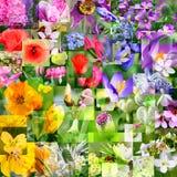 Frühlingsblumencollage Stockfoto