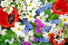 Frühlingsblumenfarben stockfotos