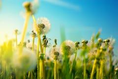 Frühlingsblumenfeld lizenzfreie stockfotos