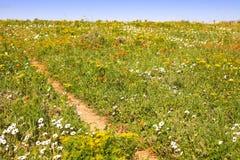 Frühlingsblumenfeld Stockbild