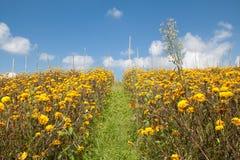 Frühlingsblumenfeld und blauer Himmel Stockfotos