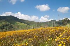 Frühlingsblumenfeld und blauer Himmel Stockbild