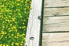 Frühlingsblumenfeld und hölzerner Hinterweg Stockfotografie
