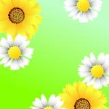 Frühlingsblumenhintergrund Stockfotos