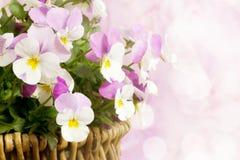 Frühlingsblumenkorb Stockfotos