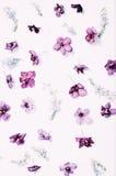 Frühlingsblumenmuster Stockfotos