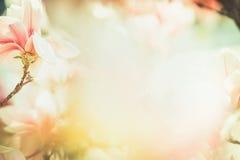 Frühlingsblumennaturhintergrund mit reizender Magnolienblüte, Rahmen, Frühjahrnatur, Pastellfarbe