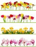 Frühlingsblumenränder Lizenzfreies Stockfoto
