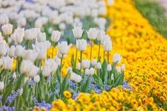 Frühlingsblumenreihen stockbild