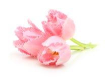 Frühlingsblumenrosa-Tulpenblumenstrauß Stockfotos