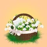 Frühlingsblumenstrauß von Schneeglöckchenblumen Lizenzfreie Stockfotografie