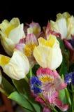 Frühlingsblumenstrauß von Tulpen und von Gartennelken Stockfotos