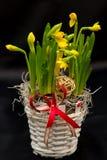 Frühlingsblumenvorbereitungen Stockbild