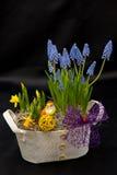 Frühlingsblumenvorbereitungen Stockfotos