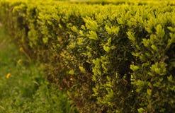 Frühlingsbusch Stockfotografie