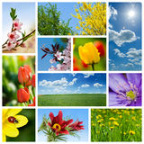 Frühlingscollage Stockfotografie