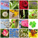 Frühlingscollage Lizenzfreie Stockfotografie
