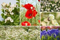 Frühlingscollage Stockfotos