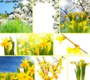 Frühlingscollage lizenzfreie stockbilder