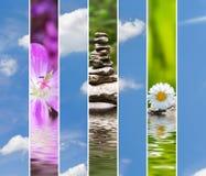 Frühlingscollage Stockfoto