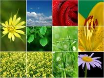 Frühlingscollage. Stockbild