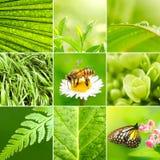 Frühlingscollagenhintergrund Stockfotos