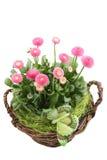 Frühlingsdekoration Lizenzfreie Stockfotos