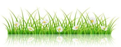 Frühlingsfahne mit grünem Gras und weißem Gänseblümchen blüht Stockbilder