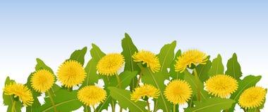 Frühlingsfahne mit Löwenzahnblumen Stockfotos