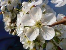 Frühlingsfarbe Lizenzfreie Stockfotos