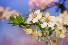 Frühlingsfarbe Stockfoto