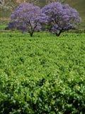 Frühlingsfarben Lizenzfreie Stockbilder