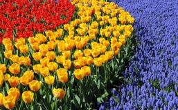 Frühlingsfarben Lizenzfreie Stockfotos