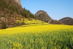 Frühlingsfarben Lizenzfreie Stockfotografie