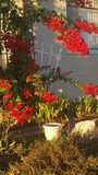 Frühlingsfarben im Fall stockfotografie