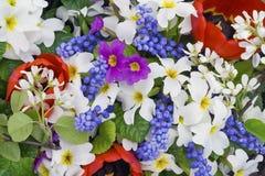 Frühlingsfarbenmischung stockfotografie