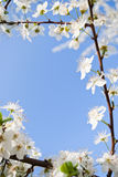 Frühlingsfeld Stockbilder