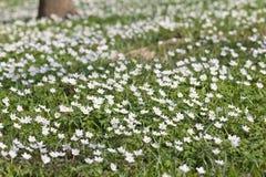 Frühlingsfeld Stockfoto