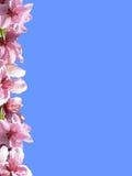 Frühlingsfeld Lizenzfreie Stockbilder