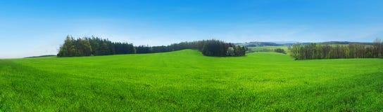 Frühlingsfeld stockbild