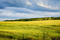 Frühlingsfeld, Landschaft von gelben Blumen, reif lizenzfreies stockfoto