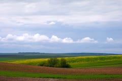 Frühlingsfelder Stockfoto