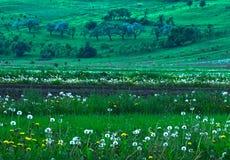 Frühlingsfelder Stockbild