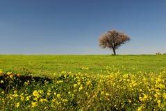 Frühlingsfelder Stockbilder