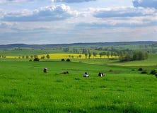 Frühlingsfelder Lizenzfreie Stockbilder