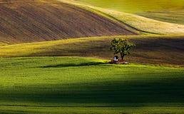 Frühlingsfelder Lizenzfreies Stockbild