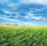 Frühlingsfelder in der Landschaft, erste Grüntrieb stockfotos