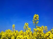 Frühlingsfeldhintergrund Lizenzfreie Stockfotografie